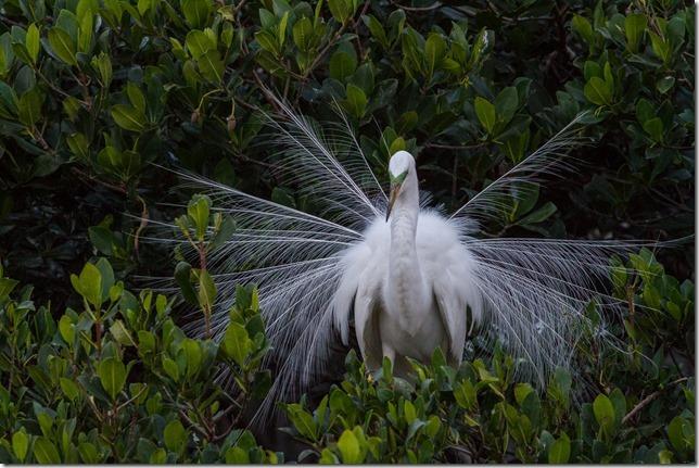 Bird-Island-5_thumb.jpg
