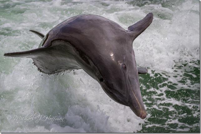 DolphinTour